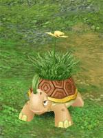 Grass Tortoise