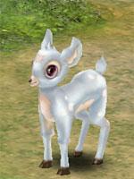 Little White Deer