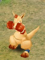 Rookie Boxeroo